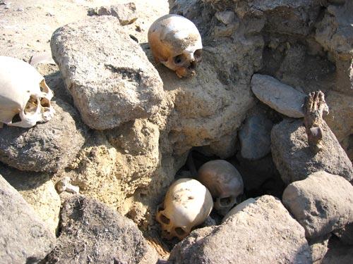 Fig. 8. Calaveras de la Necrópolis de Hawara (Egipto) y a la derecha un pie momificado. (Foto del autor).