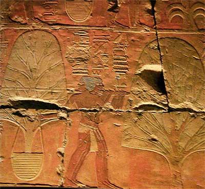 Transporte de árboles de mirra. Templo funerario de Hatshepsut. Tebas Oeste, Deir el-Bahari, XVIII dinastía
