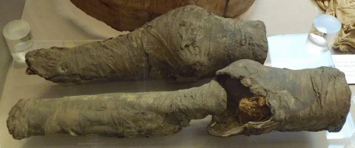 Imagen 4. Piernas encontradas en la tumba y atribuidas a Nefertari