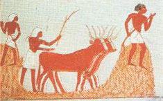 Trilla con bueyes, XVIII Dinastía