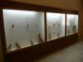 museo_kharga (119)