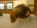 museo_kharga (71)
